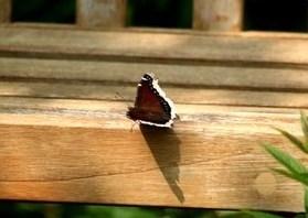 bf resting on bench