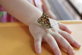 baby and butterfly hand