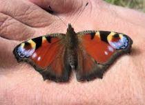 butterfly on foot 2
