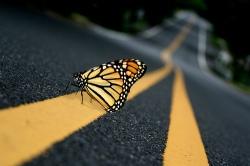 black-butterfly-photography-pretty-road-Favim.com-319704