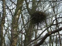 Empty Nest Photo by Kenneth Allen from geograph.org.uk