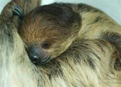 sleepy sloth.htm
